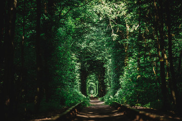 Tunnel of love from trees and railroad tracks in the summer