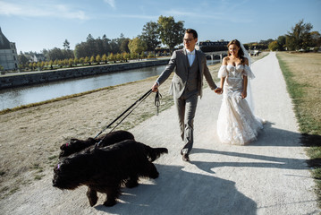 Happy newlyweds walk and take pictures with their pets, funny dogs