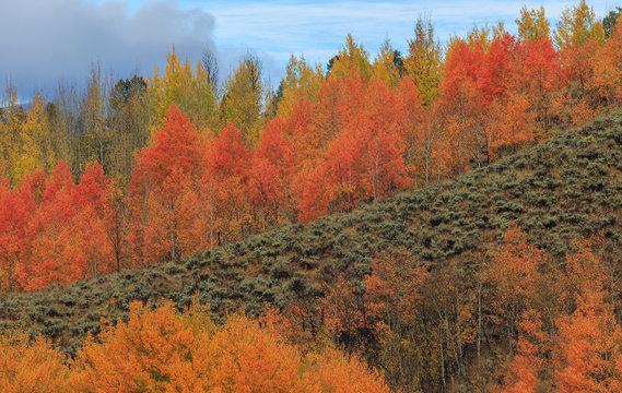 Scenic Autumn Mountain Landscape