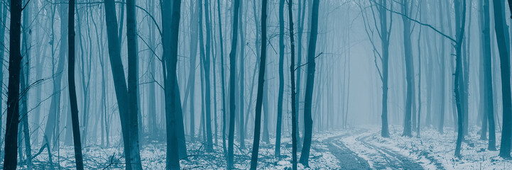 Dirt road covered with snow in a deciduous forest on a foggy morning.