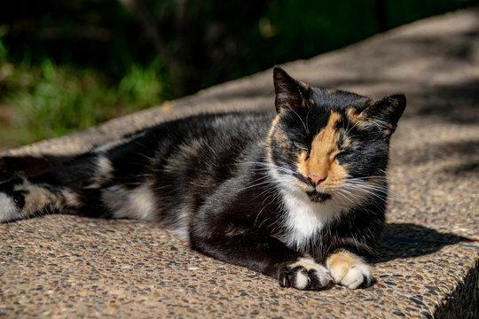 Tortoiseshell calico cat relaxing in sunshine