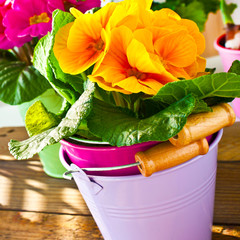 Primroses  and decoration against wooden background