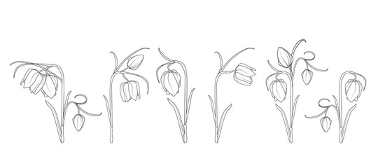 Wild tulip spring flowers black and white engraved ink art. Isolated illustration floral elements collection set.