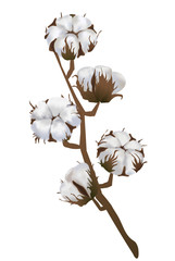 Cotton flowers in vector isolated on white background. 3d realistic clip art for labels: cottonseed oil, extract, fabrics, wool.