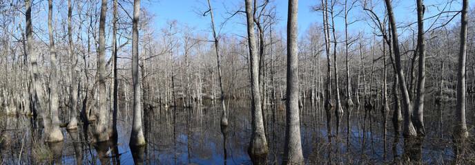 Chakchiuma Swamp in Lee Tartt Nature Preserve in Grenada, Mississippi