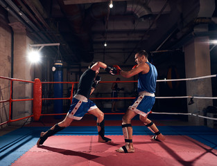 Two active sportsmen boxers practicing kickboxing in the ring at the sport club