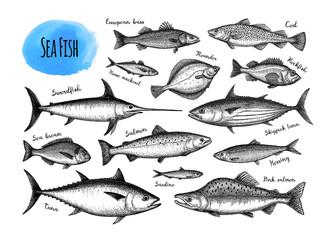 Fish big set.