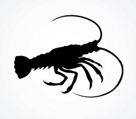 Lobster. Vector drawing