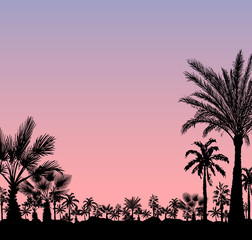 Vector card with realistic palm trees silhouette on tropical grunge pink sunset or sunrise background