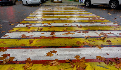 car maple leaves at a pedestrian crossing