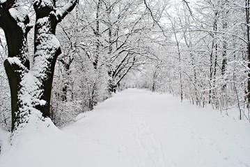 Fototapeta Pejzaż zimowy obraz