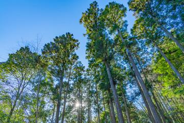 早朝の森林 朝日