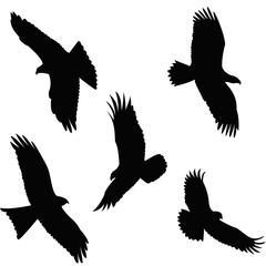 Eagle flying Silhouette on white background