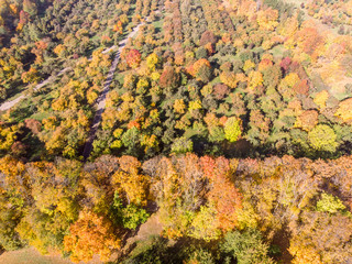 aerial panoramic view of autumnal city park. trees with bright gold foliage