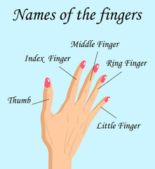 Fingers Names of Human Body Parts, vector cartoon illustration of human fingers and its names.