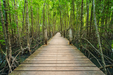 Foto auf Acrylglas Bridges wooden bridge in a mangrove forest at Tung Prong Thong, Rayong, Thailand