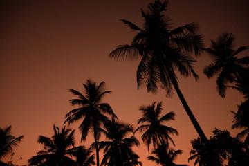 Exotic Orange Sunset Palm Silhouette Landscape. Sri Lanka Beach