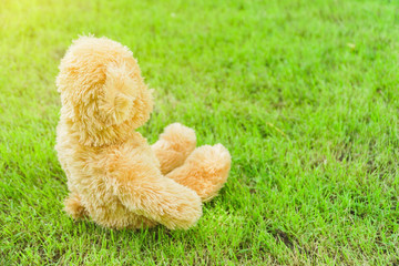 rabbit in the grass, Teddy bear sit and look straight ahead on the lawn in the garden.