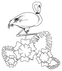 flamingo,bird, feathered, animal, zoo, paradise, summer, coloring, flowers