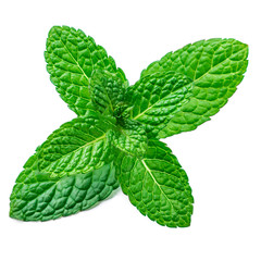 Fresh mint leaf isolated on the white background. Spearmint leaves, peppermint