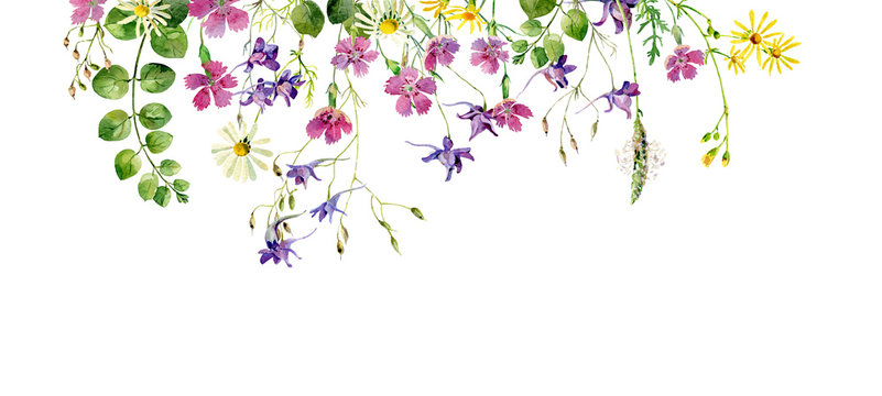 Frame of wild flowers and herbs on a white background. For greetings and invitations