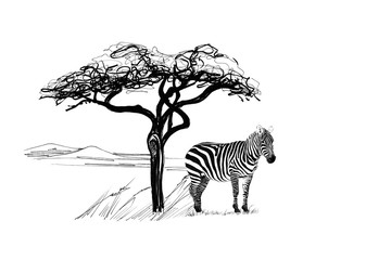 Zebra near a tree in africa. Hand drawn illustration