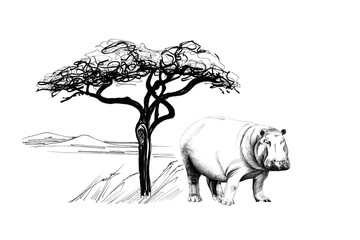 Hippo near a tree in africa. Hand drawn illustration