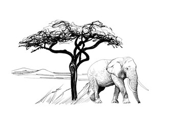 Elephant near a tree in africa. Hand drawn illustration