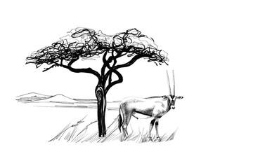 Gemsbok antelope (Oryx gazella) near a tree in africa. Hand drawn illustration
