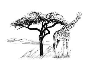 Giraffe near a tree in africa. Hand drawn illustration