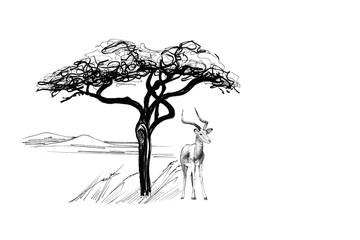 Impala near a tree in africa. Hand drawn illustration