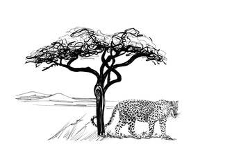 Leopard near a tree in africa. Hand drawn illustration