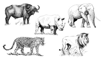 Big african five animal. Hand drawn illustration Papier Peint