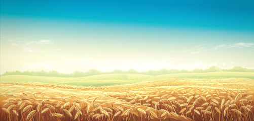 Rural landscape with wheat fields and green hils on background. Raster illustration.