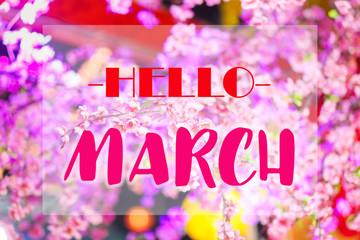 Hello March words on pink sakura flowers background.