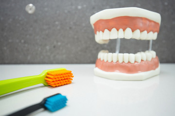 Upper and lower jaw dental model with toothbrushes