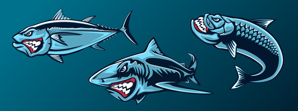 Fishing set of angry tuna, shark and piranha. Fishing emblem of ocean fish. Big eye tuna. Angry fishing club logotype. Dangerous fish.