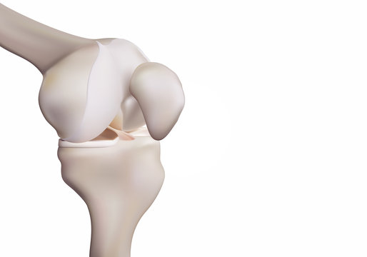 3D rendering, illustrations of human and medical knee science