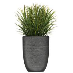 Exotic plants in pot