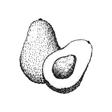 Vector hand drawn avocado illustration.