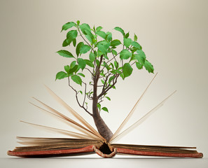Opened book's pages with green foliage on tree