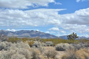 Mojave desert scenic landscape with Joshua tree