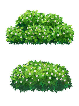 Green bushes and tree crown with white flowers.