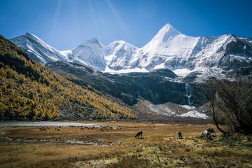 Snow Mountain in daocheng yading.