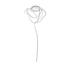 One line drawing rose flower, vector illustration