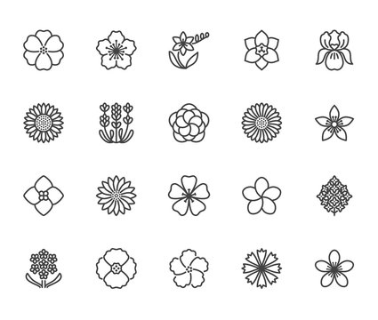 Flowers flat line icons. Beautiful garden plants - sunflower, poppy, cherry flower, lavender, gerbera, plumeria, hydrangea blossom. Thin signs for floral store. Pixel perfect 64x64 Editable Strokes