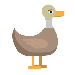 Duck. Cute bird on white background. Flat illustration