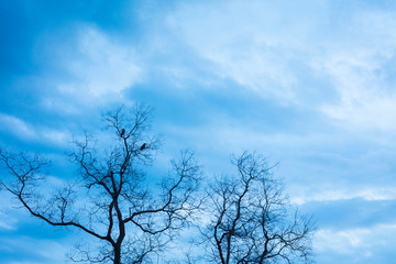 Blue cloudy sky in winter