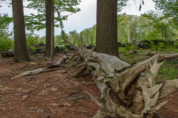 Dead wood in the forest