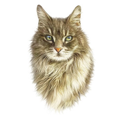 Cute fluffy cat isolated on white background. Realistic portrait of kitten. Drawing of a cat with green eyes. Good for print on T-shirt. Art background, banner for pet shop. Hand painted illustration